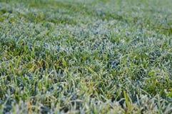 在草的早晨露水 背景蓝色云彩调遣草绿色本质天空空白小束 图库摄影