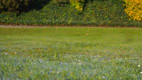 在草的早晨露水 背景蓝色云彩调遣草绿色本质天空空白小束 免版税图库摄影