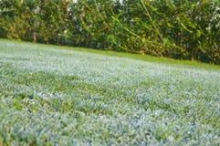 在草的早晨露水 背景蓝色云彩调遣草绿色本质天空空白小束 库存照片