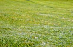 在草的早晨露水 背景蓝色云彩调遣草绿色本质天空空白小束 免版税库存图片