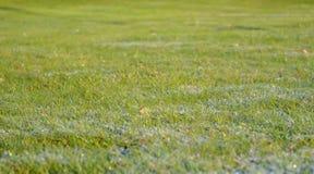 在草的早晨露水 背景蓝色云彩调遣草绿色本质天空空白小束 免版税库存照片