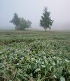 在草的早晨露水在Th公园 库存图片