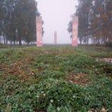 在草的早晨露水在Th公园 免版税库存图片