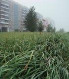 在草的早晨露水在Th城市 库存图片