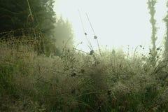 在草的早晨露水 免版税库存照片