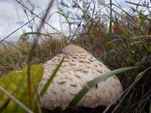 在草的晴朗的蘑菇在一座干净的山 库存图片