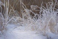 在草的树冰在下的冷淡的2月早晨 库存照片