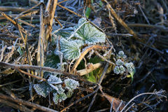 在草的树冰 免版税库存图片