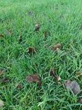 在草的树叶子 库存图片
