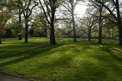 在草的树阴影 免版税库存图片