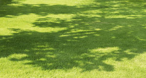 在草的树阴影 库存图片