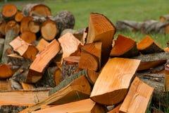 在草的桤木木柴 免版税库存照片
