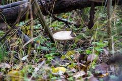 在草的森林蘑菇 免版税图库摄影