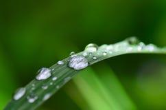在草的水滴早晨 库存照片