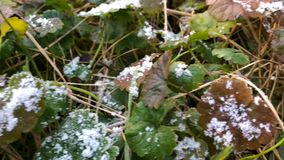 在草的熔化的霜,关闭清早霜,春天概念 影视素材