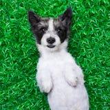在草的狗 免版税库存照片