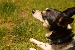 在草的狗 库存图片