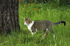 在草的猫 库存照片