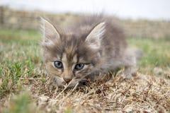 在草的猫 库存图片