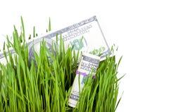 在草的生长金钱 库存照片