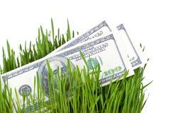 在草的生长金钱 免版税库存照片