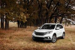 在草的白色现代汽车逗留在森林附近秋天 免版税库存图片