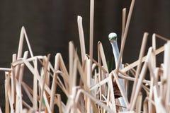 在草的白色苍鹭 免版税库存照片