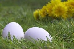 在草的白鸡蛋 库存图片