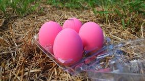 在草的盐味的鸡蛋 免版税库存照片