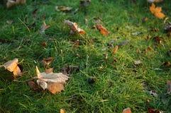 在草的秋叶在11月太阳 免版税库存图片