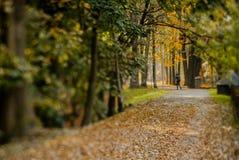在草的秋叶 免版税图库摄影