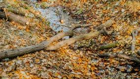 在草的秋叶 免版税库存照片