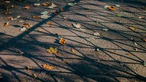 在草的秋叶 库存图片