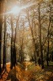 在草的秋叶 图库摄影
