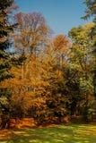 在草的秋叶 免版税库存图片