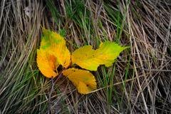 在草的秋天leafage 库存照片