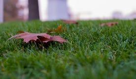 在草的空的叶子背景 免版税图库摄影