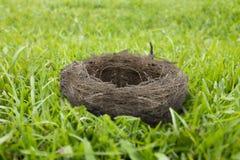 在草的空的鸟巢 免版税库存照片