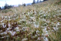 在草的第一雪 库存照片
