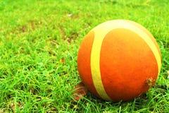 在草的篮球 免版税库存图片