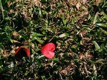 在草的红心纸 库存图片
