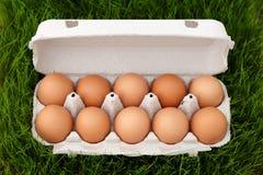 在草的红皮蛋箱子 免版税库存照片