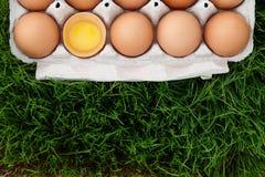 在草的红皮蛋箱子 免版税图库摄影