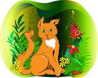 在草的红色猫 免版税库存图片