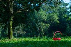 在草的红色篮子在树下 免版税库存照片