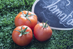 在草的红色蕃茄与水下落 免版税库存照片