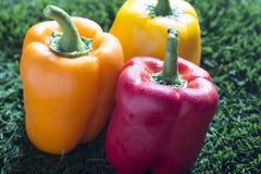 在草的红色,黄色和橙色辣椒粉用水滴下 免版税库存照片