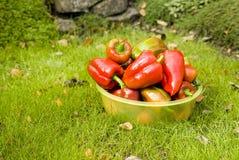 在草的红辣椒 免版税库存照片