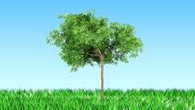 在草的结构树 免版税库存图片