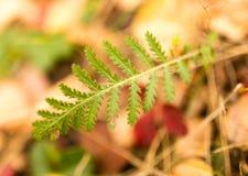 在草的绿色叶子在秋天 库存图片